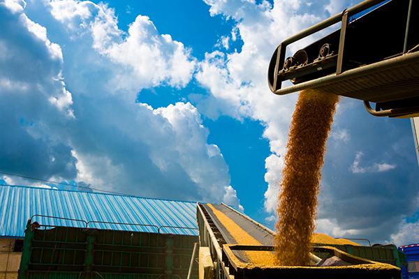 机械化粮食储备库区粮食传输设备